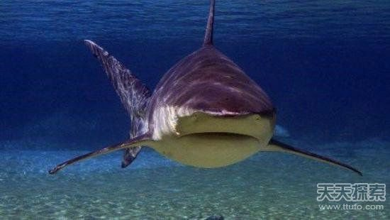 亚马逊河中最可怕的动物