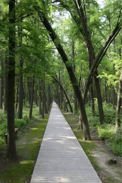 江苏,浙江罕见的水上森林公园, 这个季节去刚刚好!