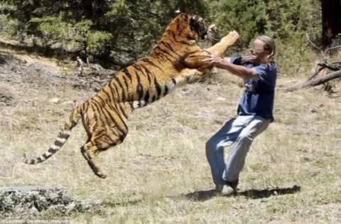 野生动物园游客下车 被蹿出老虎叼走(视频)