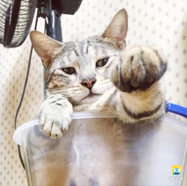 主人发现自家小猫躲在水桶里