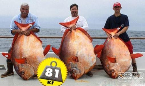 世界最大螃蟹  椰子蟹是最大的陆生节肢动物之一