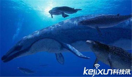 已经绝种的古代海洋哺乳动物,现代鲸的近亲,是鲸类中的一种,生存于3900万至3400万年前的始新世晚期。 龙王鲸刚开始被误认为是巨大的海洋爬虫类的化石,所以被命名为帝王蜥蜴。它最早是在美国路易斯安那州被发现的,随后古生物学家从埃及与巴基斯坦发现的化石中辨认出至少存在两个其他的种。 龙王鲸平均身长为18米(60英尺),而且拥有比现代鲸更为修长的身体。古生物学家对于它们已经退化的短小后肢非常感兴趣,因为它可以证明现代鲸鱼原先是由陆生哺乳类动物演化而来 7.