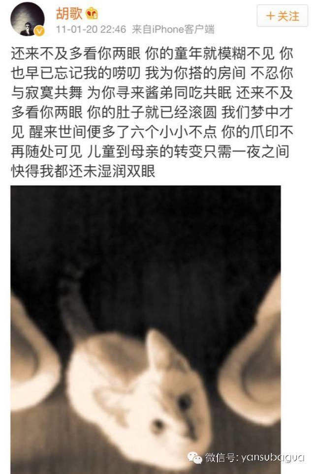 杨颖与动物图片