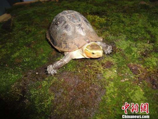 中国超三成两栖爬行动物受到物种威胁 华南西南最多