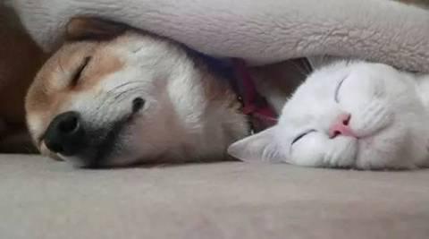 猫咪黑白图片伤感.