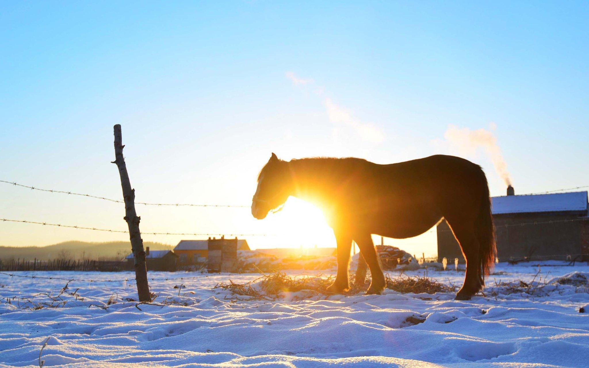 鄂伦春冬季早晨的风景图片电脑高清壁纸 _壁纸素材_百优a精美图库