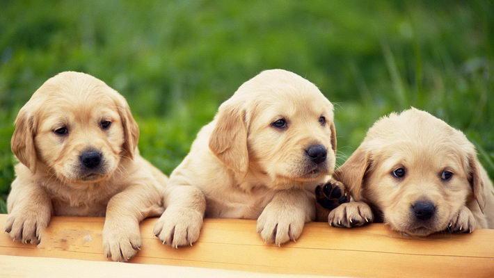 可爱狗狗高清壁纸