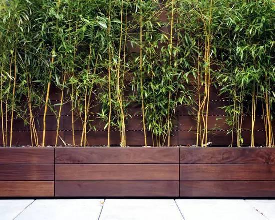 既能使墙面或者走道的设计不单调乏味, 同时也不会因为竹子的高度而