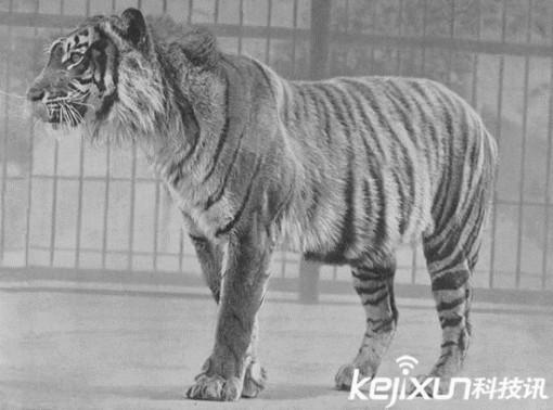 十大灭绝动物起死回生