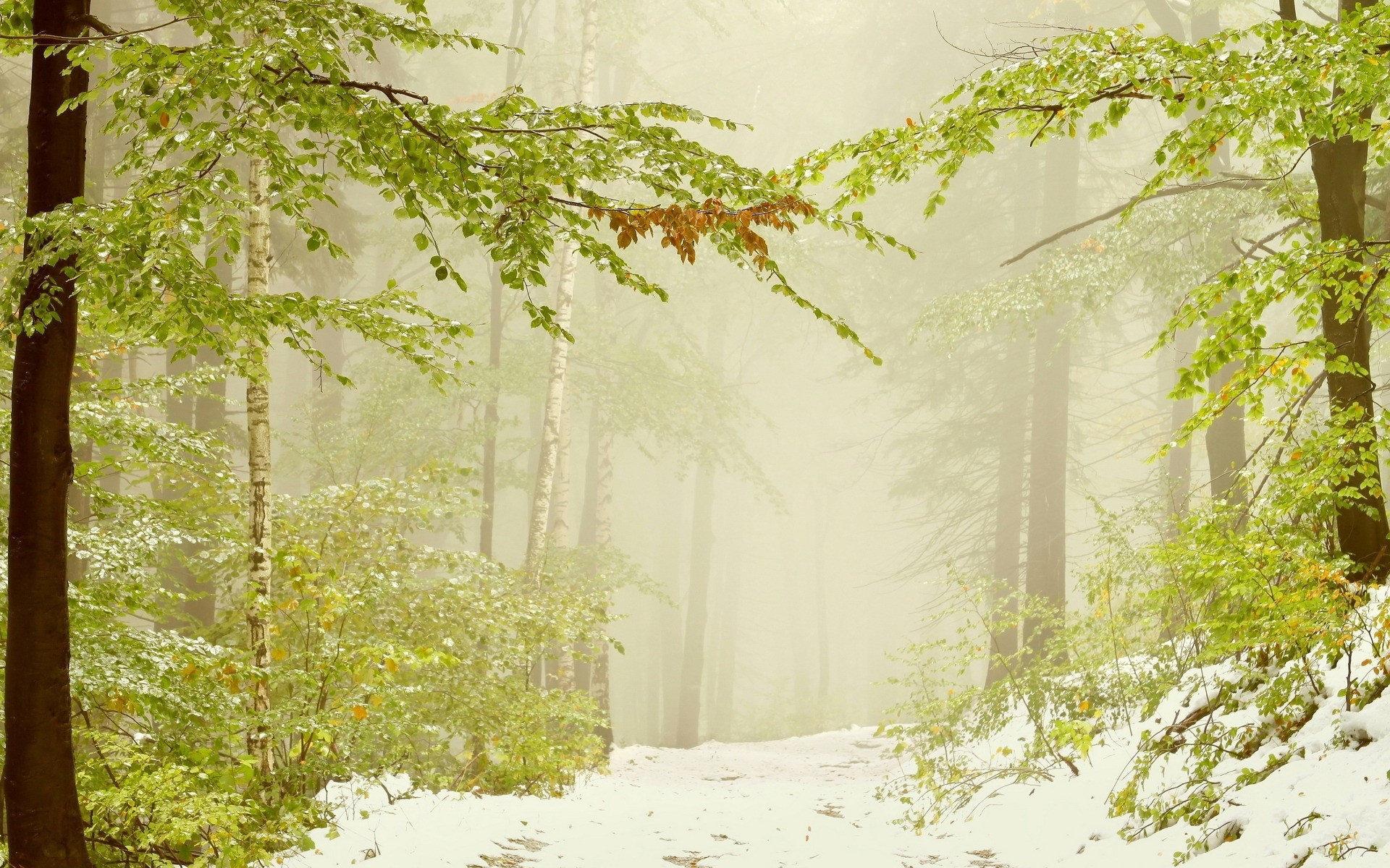 冬季雪景桌面壁纸]全屏雪景动态壁纸
