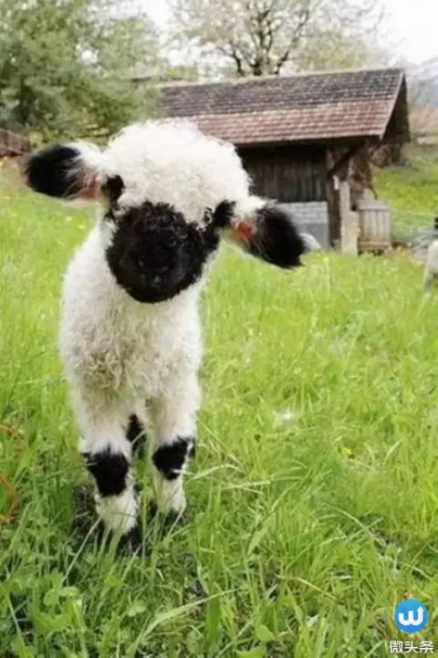 萌萌哒! 这18种可爱的动物, 你可能一个都没见过!
