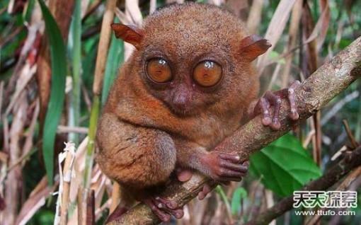 15种最稀奇古怪动物 你知道几个