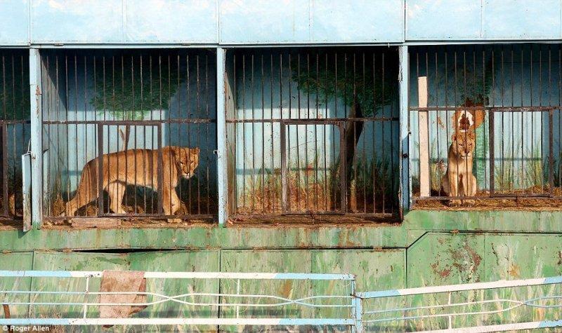 世界上最悲伤的动物园
