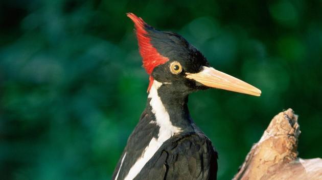 物种是否已经灭绝? 红色名录监测动物生存状态