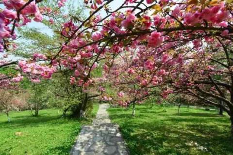 贵阳森林公园看樱花,感受这座城市的别样浪漫 点击加载图片 地址:南明