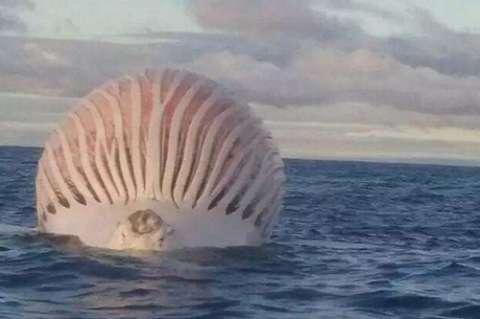 生物学家解剖鲸鱼遭遇 恐怖爆炸 , 医院住了十多天