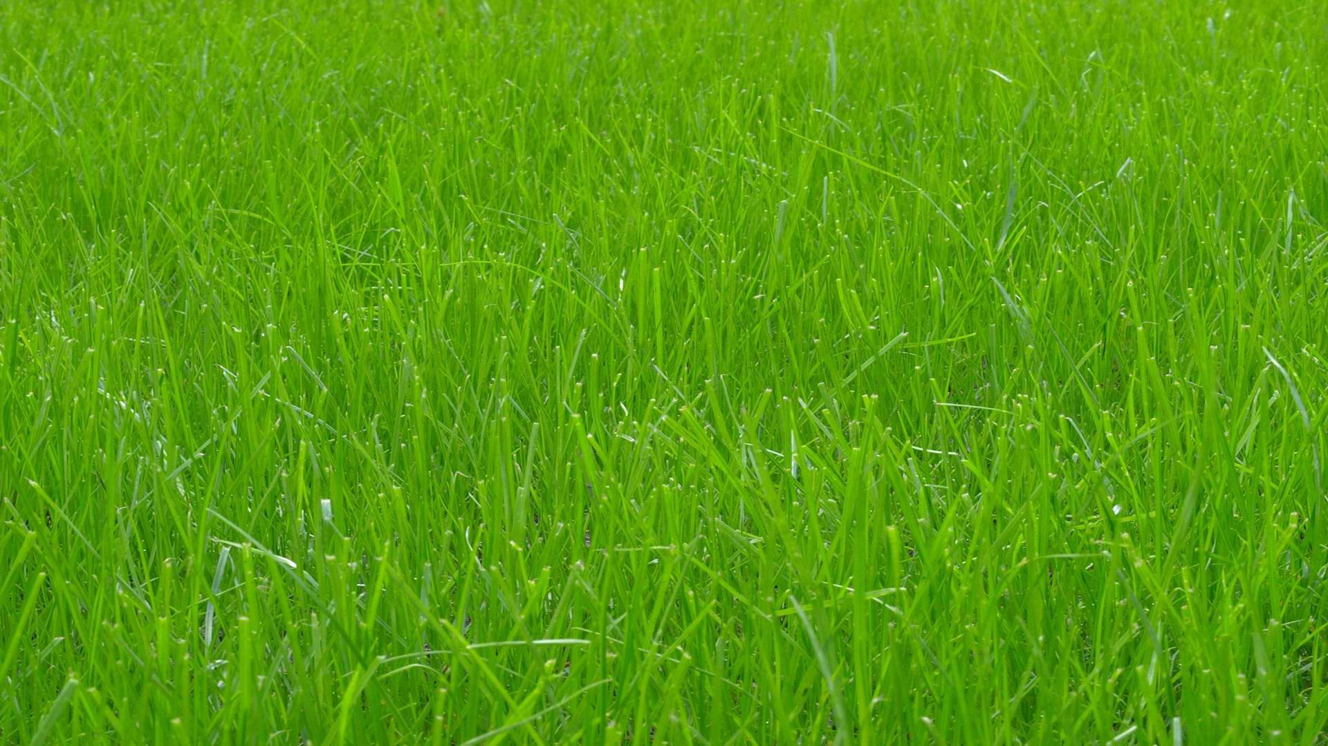 手机壁纸绿色护眼风景 绿色护眼大自然风景电脑桌面壁纸 _壁纸素材_百
