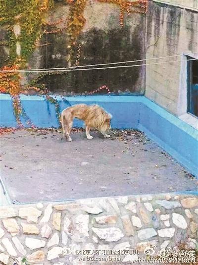 动物园狮子笼图片