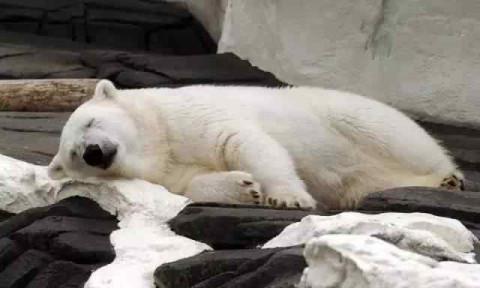 不应该打着关爱动物的旗号去圈养它 当那些可爱的动物变成一个个赚钱