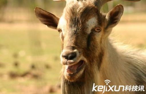 动物精液十大奇葩实验