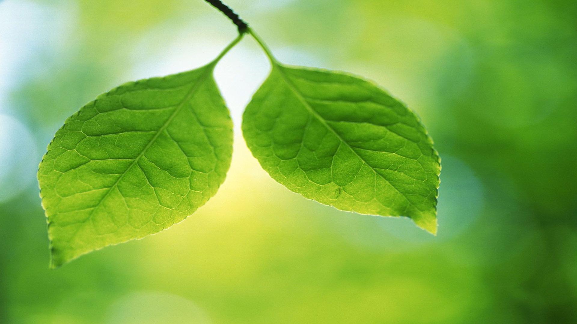 绿色壁纸图片 精选绿色电脑锁屏背景护眼绿叶壁纸图片下载 _壁纸素材图片