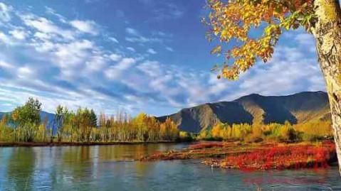 西藏枫叶风景壁纸