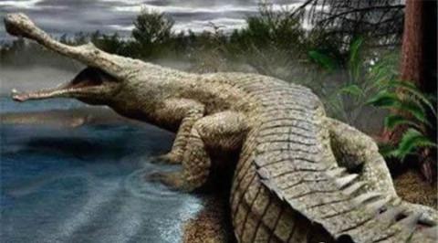 虎鳄农场动物主题公园