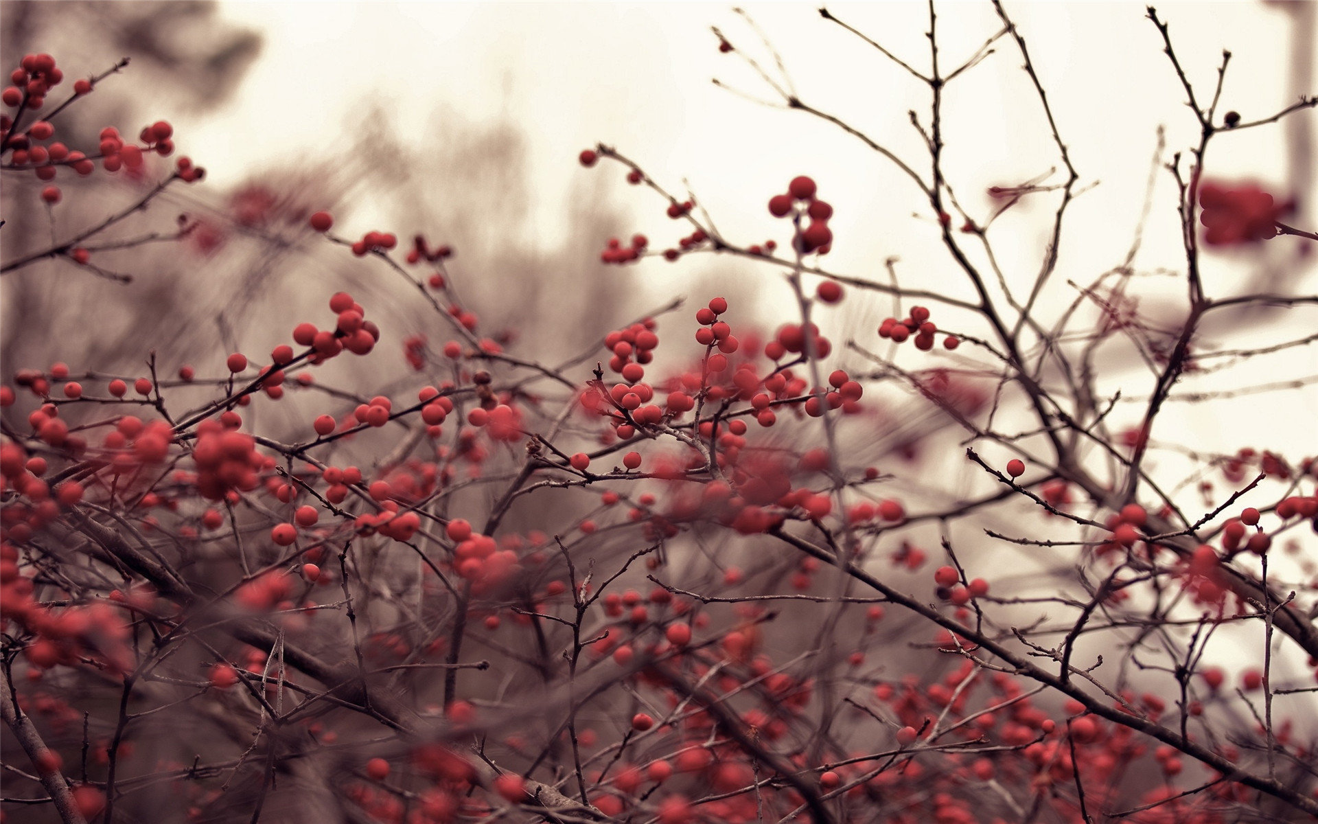 百度壁纸图片大全大图 清新大自然唯美好看壁纸图片大全风景高清图集