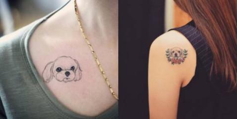 关内容 宠物纹小小一个在肩膀也可爱还很秀气,适合刚开始迈入纹身