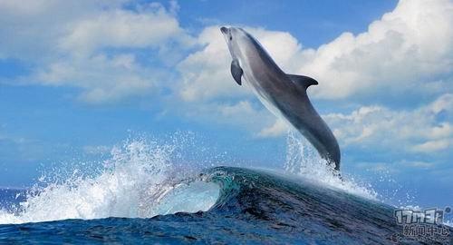 海豚是唯一一种脑利用率比人类高的动物——不