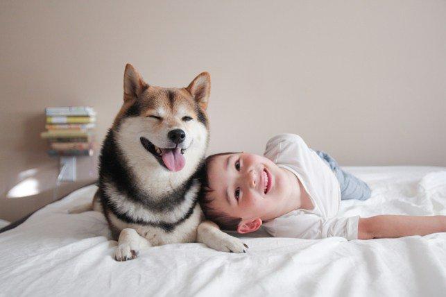 小朋友和柴犬幸福生活