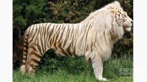 这些完美的混血动物 美得妙不可言 - 微信奴