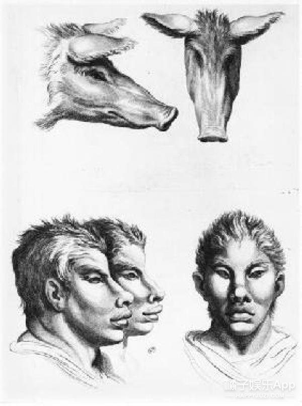 动物素描画法步骤猪