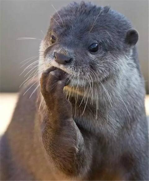 这些可爱又不常见的动物, 你知道叫什么吗?