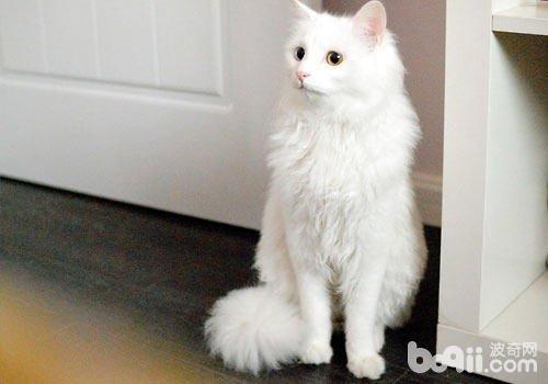 间单可爱小猫的画法