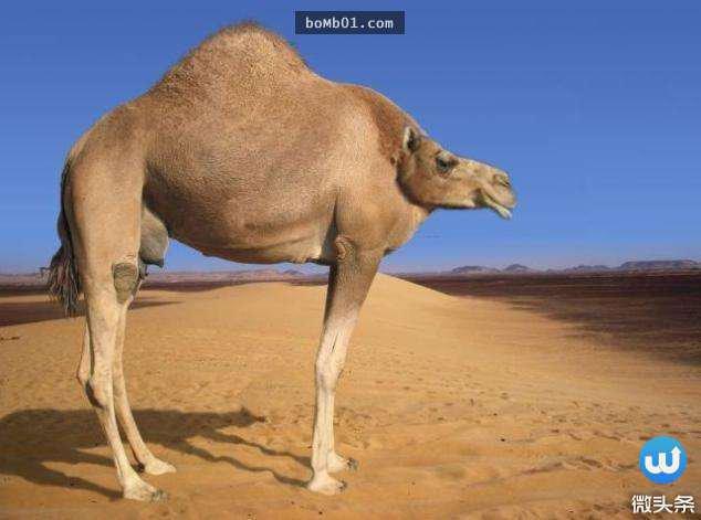 没脖子的动物? 12张照片告诉你脖子是多么重要