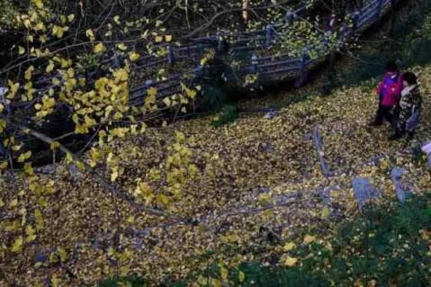 点击加载图片 3 这个秋天, 去花溪 黄金大道上骑一次车, 在飘零的