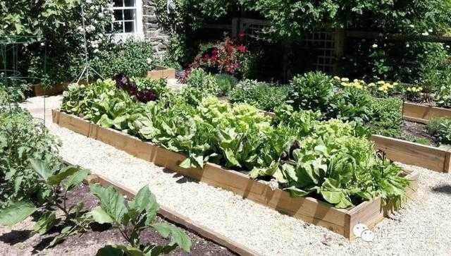农村庭院花坛设计图
